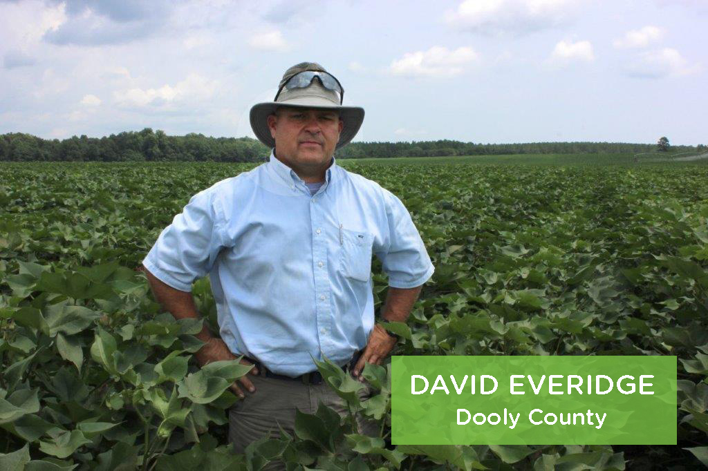 David Everidge