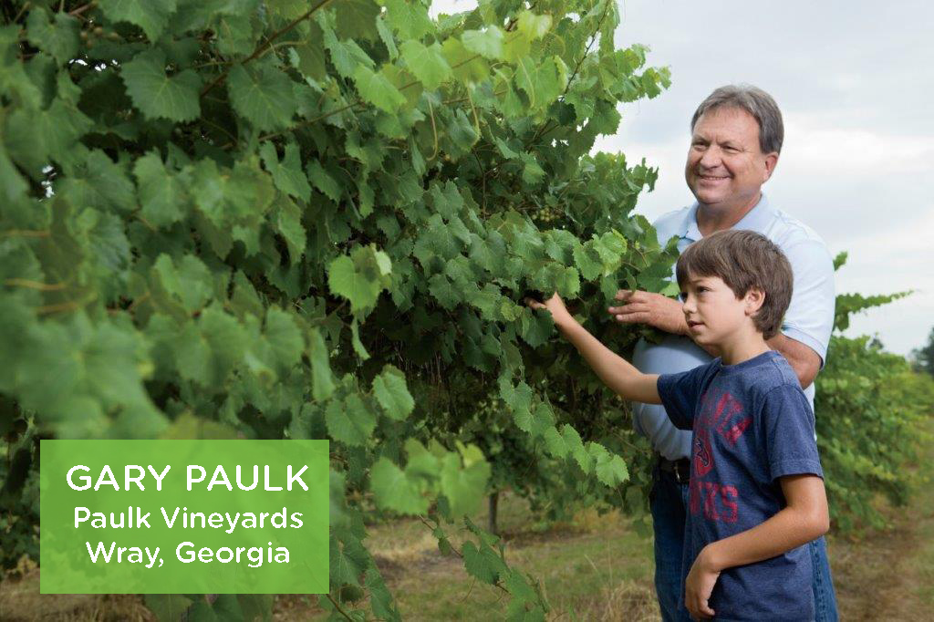 Paulk Vineyards