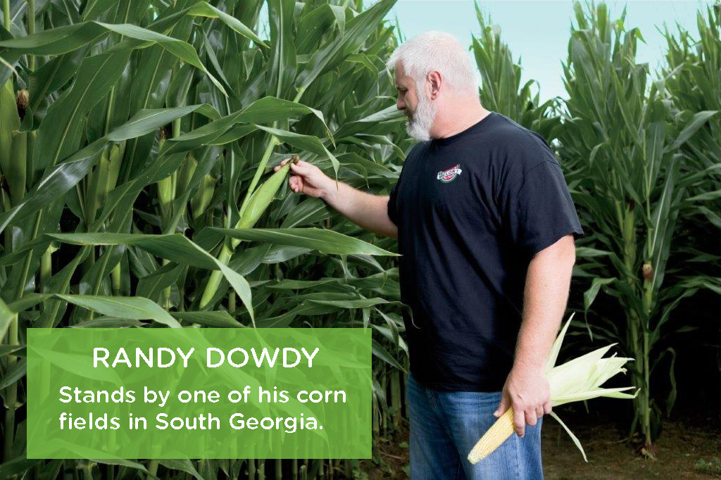 Randy Dowdy stands by one of his corn fields in South Georgia.